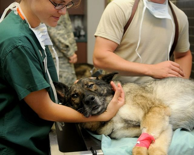 Auxiliar tecnico veterinario Blog imagen portada